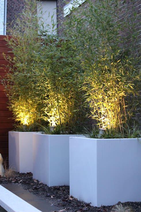 Voortuin ideeën Groene voortuin met bamboe