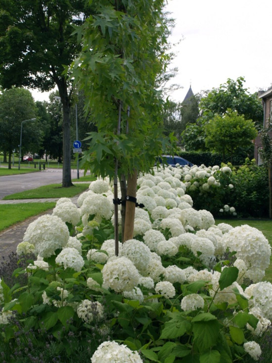 Voortuin ideeën Planten en bloemen