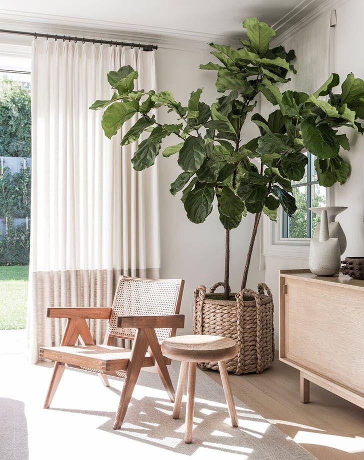 groen interieur planten