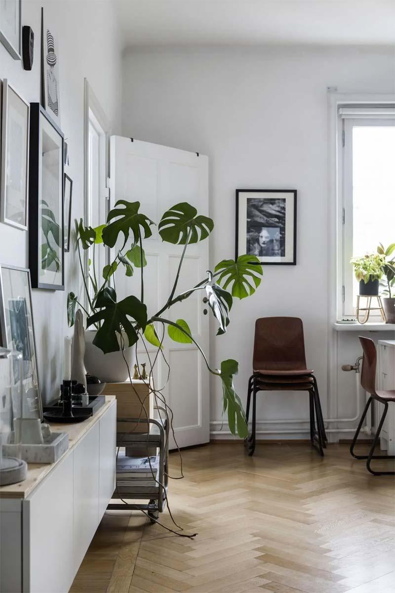 leuke housewarming cadeau ideeen plant