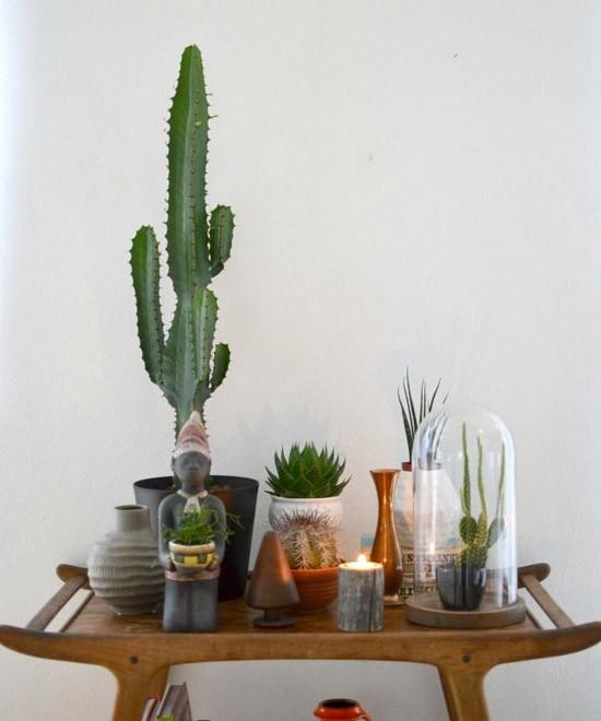 Leuke planten in huis