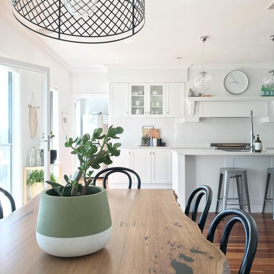 onderhoudsvriendelijke kamerplant jadeplant