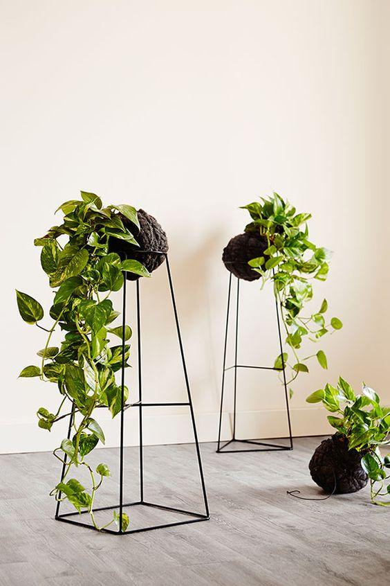 onderhoudsvriendelijke kamerplant pothos plant