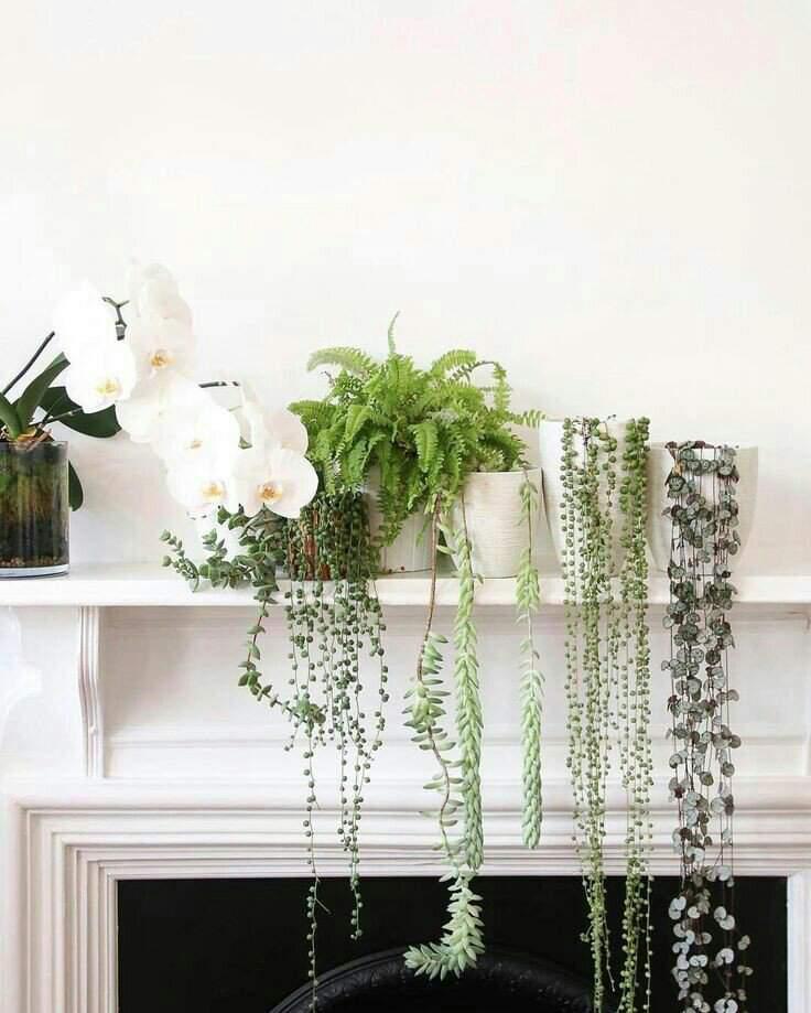 onderhoudsvriendelijke kamerplanten