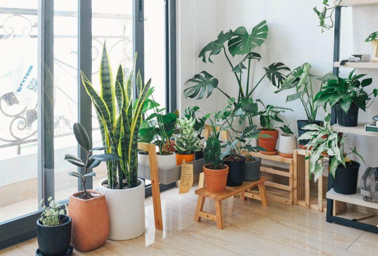 planten herkennen apps