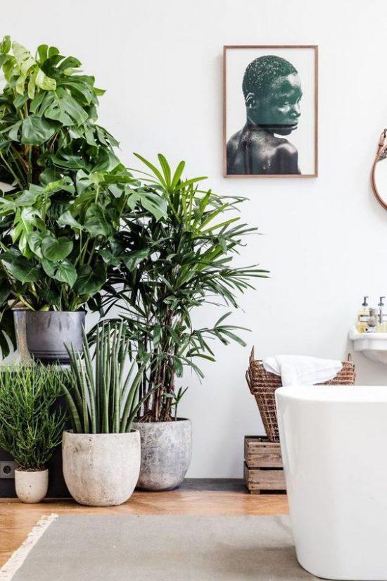 Planten in en om het huis